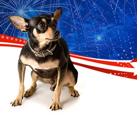 Loud noises can terrify pets, so don't include them when celebrations will include fireworks. The HSUS.