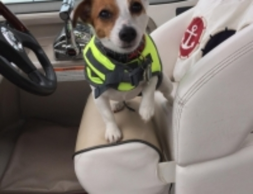 Skipper Isabelle's dog boating safety tips