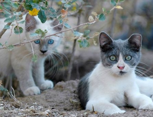 Helping stray cats: TNR is the key