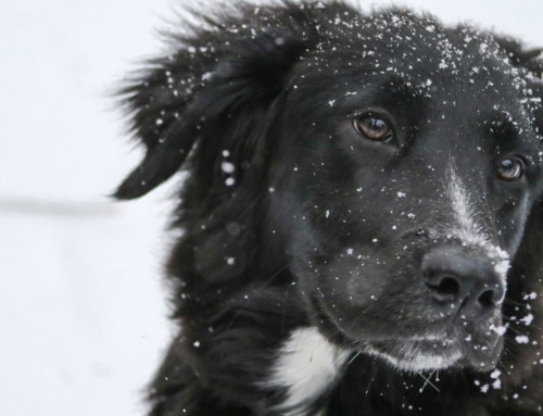Who to call if you see a pet left in the cold