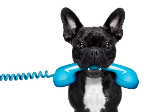 5 Phone Numbers Every Dog Owner Should Have Handy