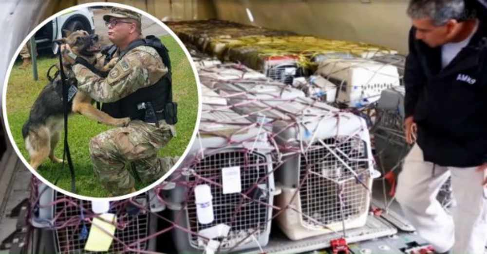 92 Military K9s Are Coming Home After Serving In Afghanistan