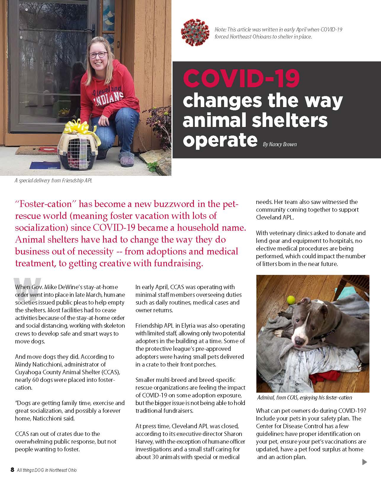 COVID-19 changes the way animal shelters operate
